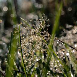 freetoedit rain raindrops nature naturephotography grass shinebrightlikeadiamond photography mood moody onmyway myclick reflection bokeh