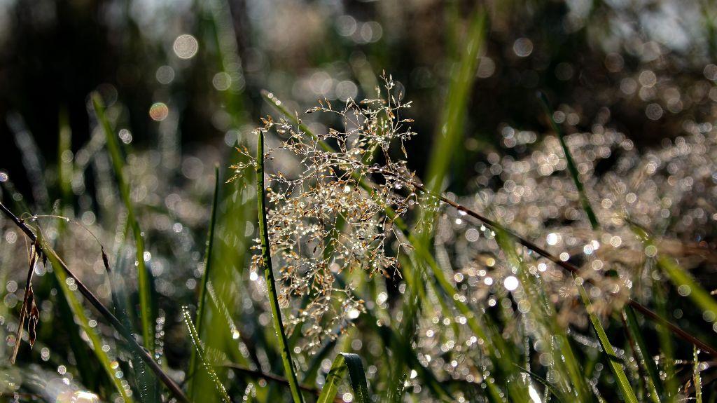 ...beautyful little things found on my morning walk,shines like diamonds...  #freetoedit #rain #raindrops #nature #naturephotography #grass #shinebrightlikeadiamond #photography #mood #moody #onmyway #myclick #reflection #bokeh
