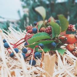 freetoedit pcleaves leaves autumn