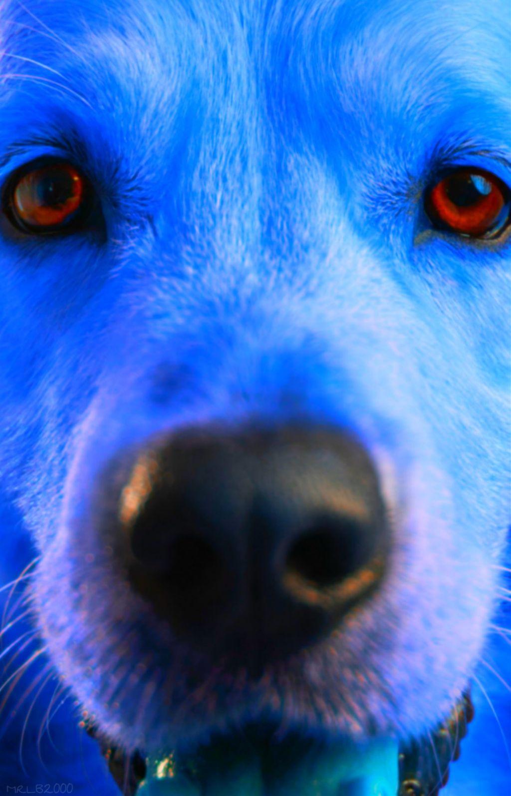 #freetoedit#myart#remix#neon#blue#dog#animal#mrlb2000#remixit#madewithpicsart#myart#photo#omg#amazing#lol#crazy#portrait#sweet# @pa @freetoedit