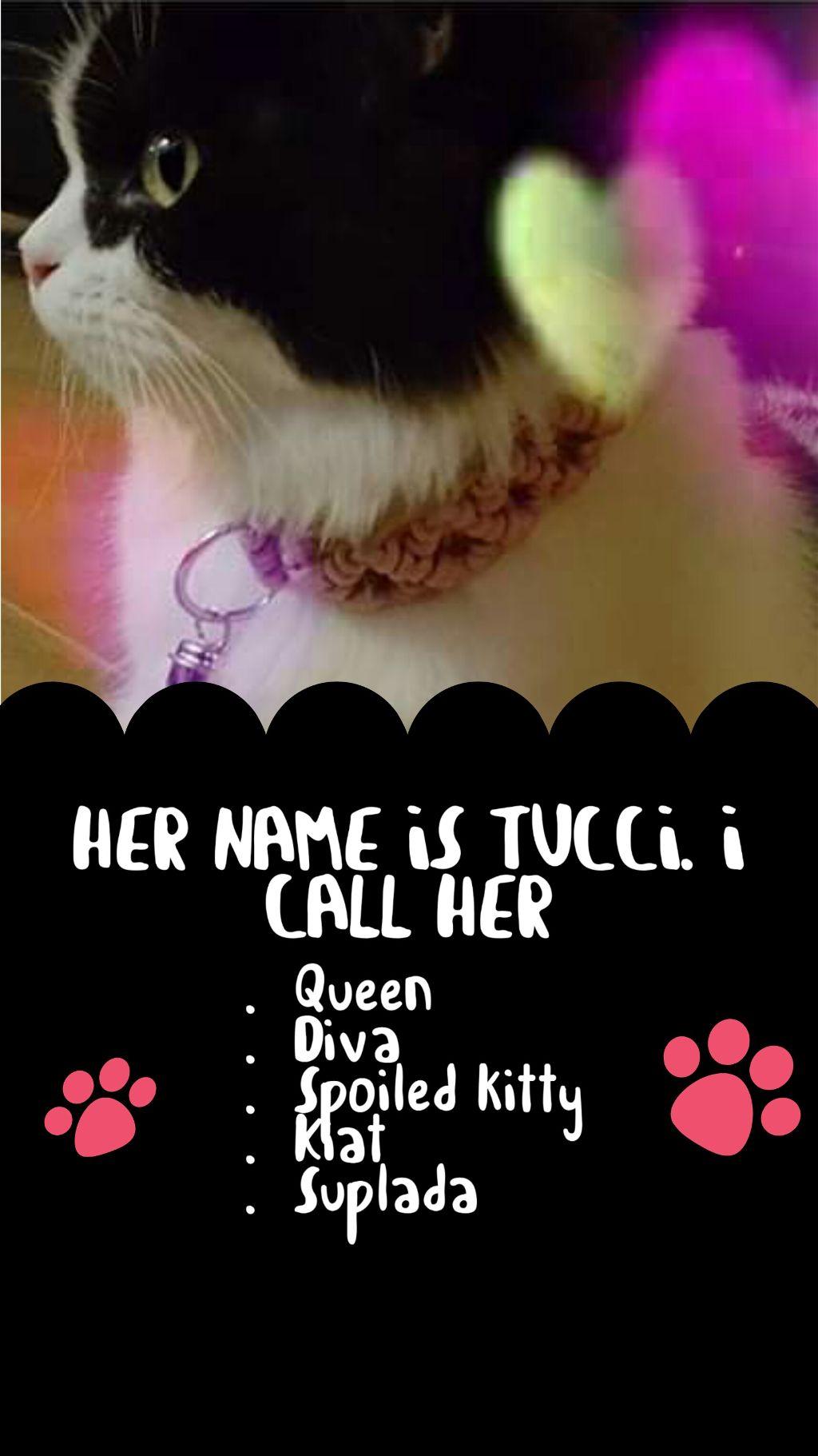 #freetoedit  #mypet #cutepets  #cat #template