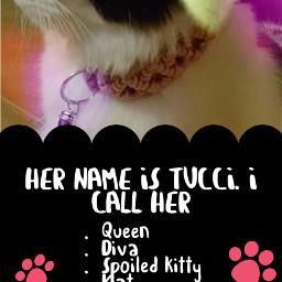freetoedit mypet cutepets cat template