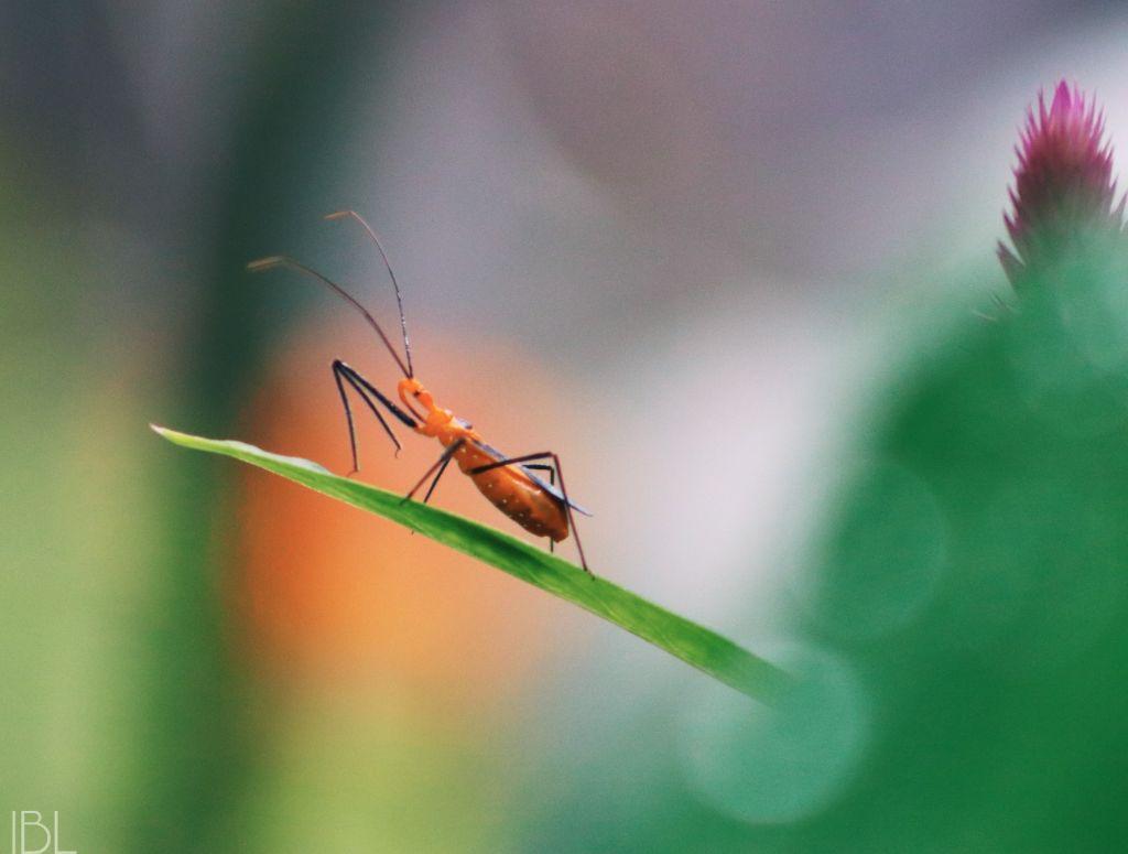 #freetoedit #remix #nature #colorful #photography #assassinbug #insects #bugs #bokeh #bokehbackground