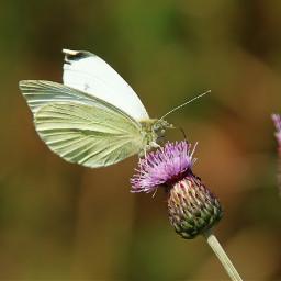 photography nature butterfly freetoedit pcminimalism