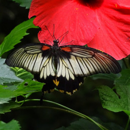 butterfly red nature photography myphoto freetoedit