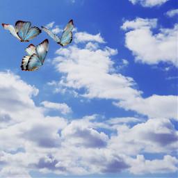 freetoedit cloudyday angels sky butterflies