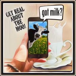 freetoedit cellphone cow milk gotmilk