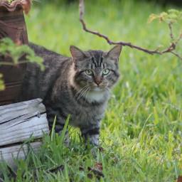 freetoedit remix cats catsofpicsart inmyneighborhood