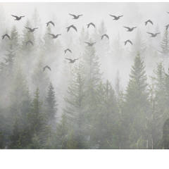 ftestickers trees forest fog birds freetoedit