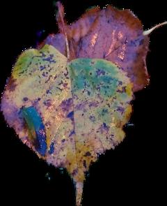 naturephotography autumnleaves colorful freetoedit scautumnleaves