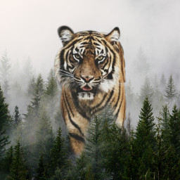 freetoedit tigre foret ecgiantanimals giantanimals
