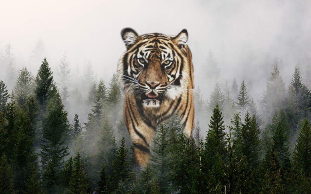 #freetoedit #tigre #foret