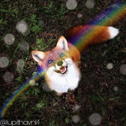 fox rainbow edit freetoedit rainbowbrush