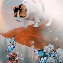 madewithpicsart picsart cat tumblr imagination fantasy remixit remixed