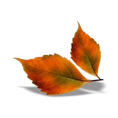 ftestickers autumn fallleaves leaves fall freetoedit