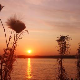 sunset plant nature