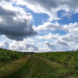 freetoedit onmyway fields clouds nature
