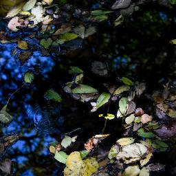 ripple water leaves light creek freetoedit