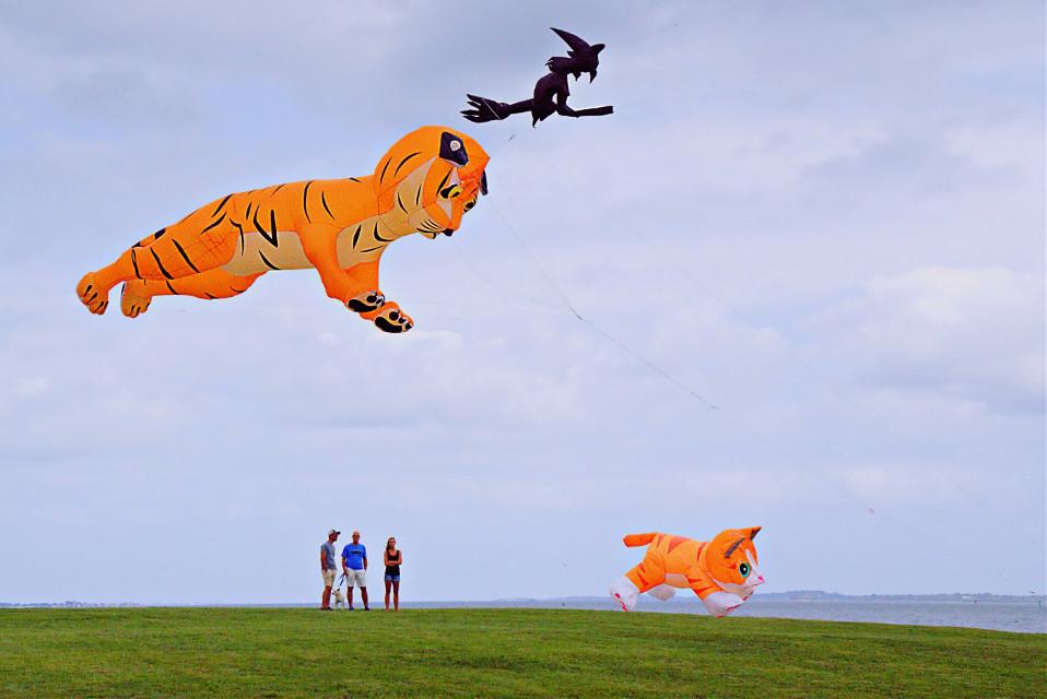 #freetoedit #outdoorphotography #kiteflying festival