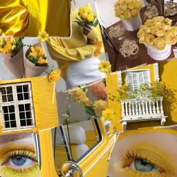 freetoedit yellow yellow_flower