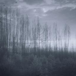 freetoedit forest woods landscape sky