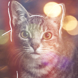 freetoedit cat catslover lovely cute