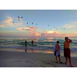 beach florida brothers brotherhood seagulls