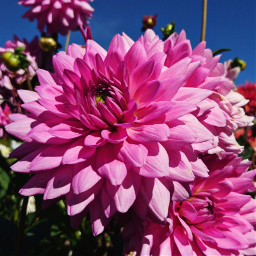 nature photography colorful flowers plants