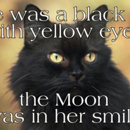freetoedit cat poem love poetry