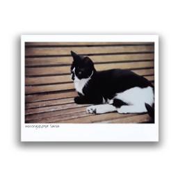mypet cats catsofpicsart cute petsandanimals