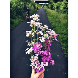 bouquet flowers wildflowers nature trails freetoedit