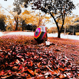freetoedit picsart autumm leavesfall myphoto