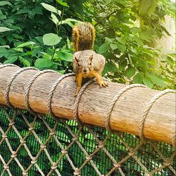 petsandanimals petsofpa animals picsart naturephotography freetoedit freetoeditremix