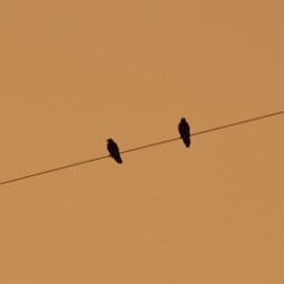 freetoedit photography naturephotography naturelovers pcminimalism