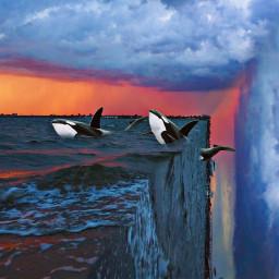 freetoedit edgeoftheworld ocean sunset orcas