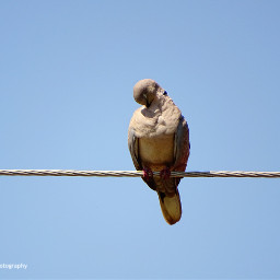 freetoedit birds birdsphotography birdcage wildlife