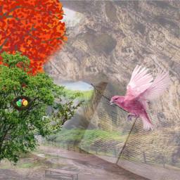 freetoedit cave tree bird nesting ircbreaktime