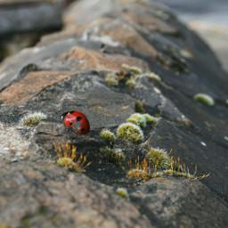 travel ireland ladybug bug green