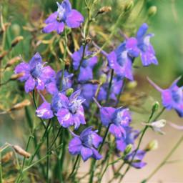 freetoedit floral