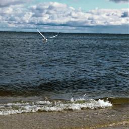 naturephotography balticsea beach poland🇵🇱 september2019
