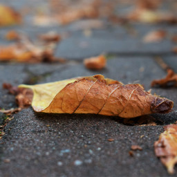 autumn pcleaves leaves