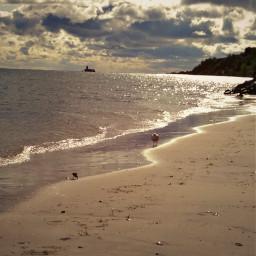 naturephotography sea beach skyandclouds windyweather