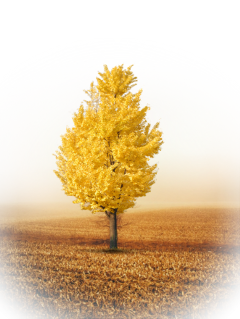 ftestickers background grass tree autumn freetoedit