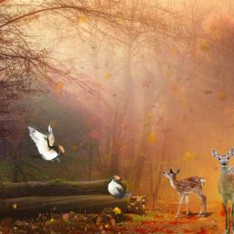 freetoedit nature landscape forest deer