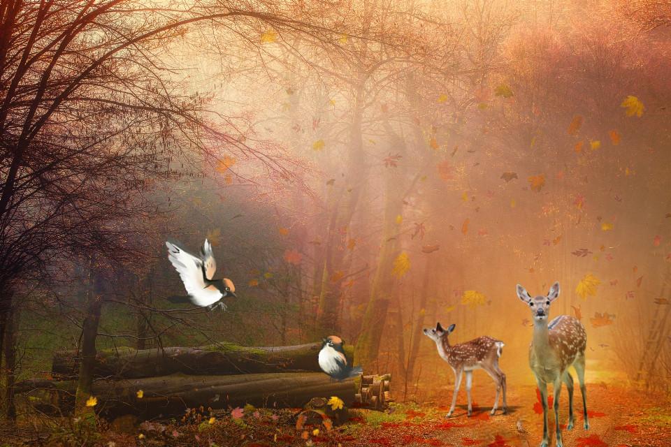 #freetoedit #nature #landscape #forest #deer #birds #autumn #fallcolors #stickers #picsarteffects #myedit #madewithpicsart