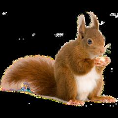 ftestickers squirrel freetoedit