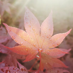 freetoedit leaf photography light pcleaves