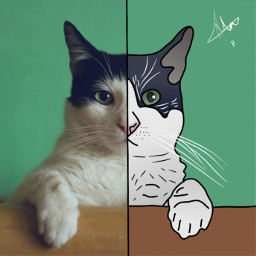 cat faceart art draw outline freetoedit