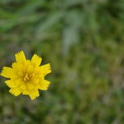nature myedit mygarden simple wildflower