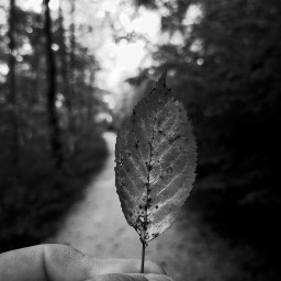 freetoedit blackandwhite leaf humanhand myhand